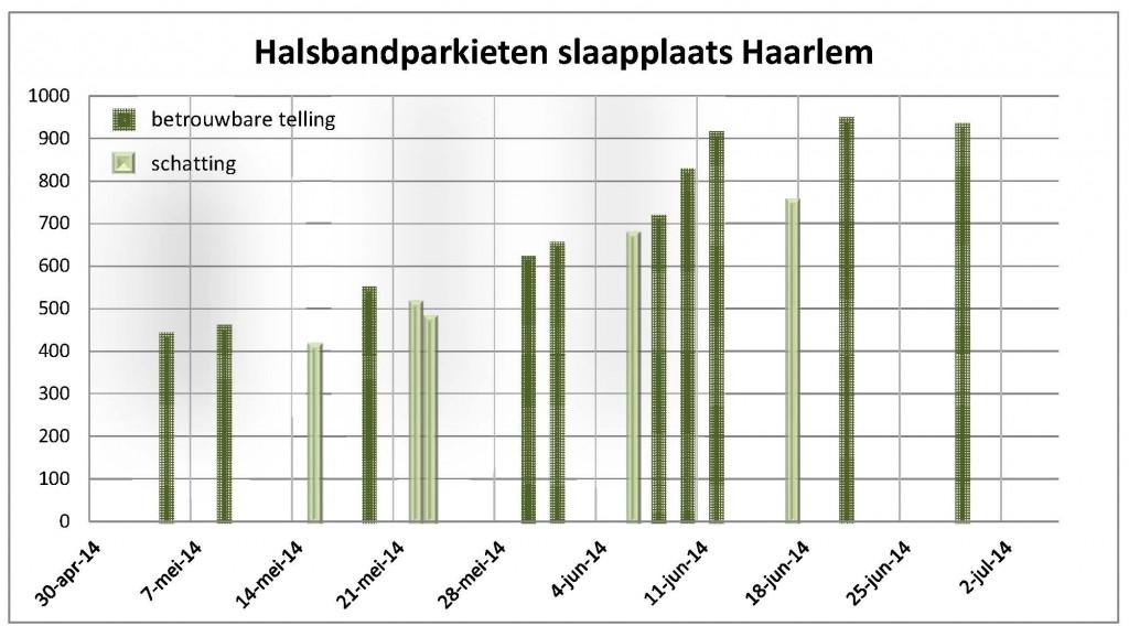 Parkieten zomer 2014 Haarlem